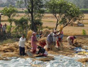 nepal-nepali-work-working-people-2459_t2
