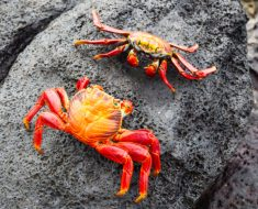 How To Dispel Negativity? The Crab Factor!